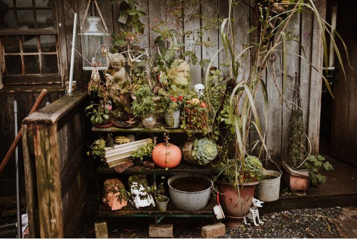Pumpkin Spice | OldestStone Farm